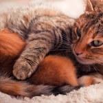 Newborn kitten with mother — Stock Photo