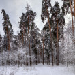 Stock Photo: Winter panorama