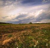 Windy field — Stock Photo