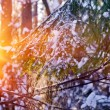 Spruce branch with falling snow — Stock Photo