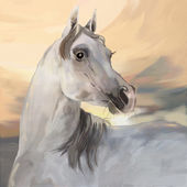 Grey arabian stallion — Stock Photo