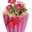 Pink beautiful flowers in a decorative pot - Stock Photo