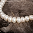 White pearls on feathers — Stock Photo