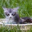 Kitten — Stock Photo #8881204