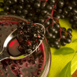 Sambucus nigra jam - Stock Photo