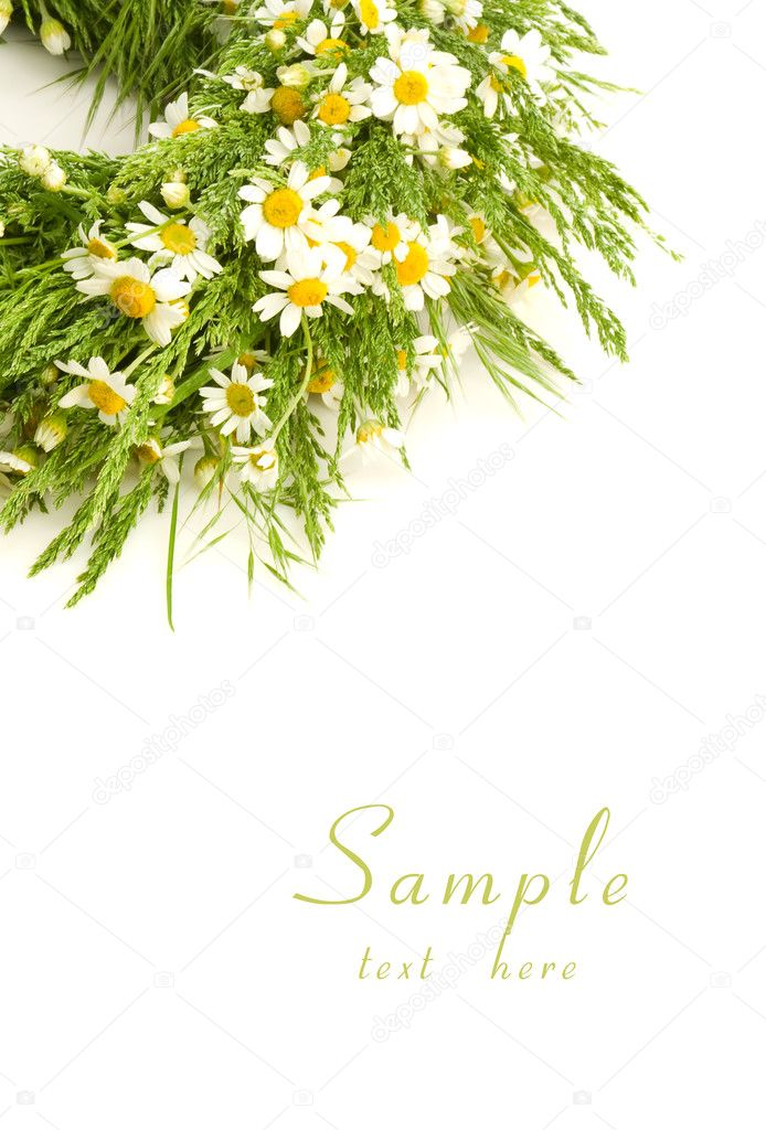 Daisies and text — Stock Photo #8881198