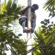 Strong deft indian man on the tree - Stok fotoraf