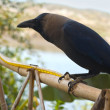 Crow — Stock Photo #9548360