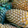 Pineapple — Stock Photo #9548405