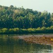 A bird sanctuary in Panaji, Chorao island - Stock Photo