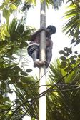 Strong deft indian man on the tree — Stock Photo