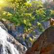 Monkey on Dudhsagar Waterfall, Goa — Stock Photo