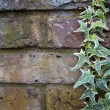 Background of brick wall  with ivy - Stock Photo