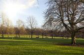 Walpole Park — Stock Photo