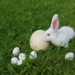 Rabbit and eggs on a grass — Stock Photo
