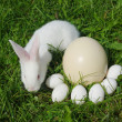 Stock Photo: White rabbit and eggs