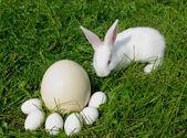 Rabbit and eggs — Stock Photo