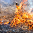 Burn off dry grass — Stock Photo