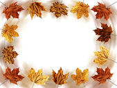 Frame of yellow autumn maple leaves — Stock Photo