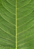Leaf natural background — Stock Photo