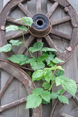 Old wooden wagon wheels and green plantlet — Stock Photo