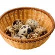 Quail egg — Stock Photo