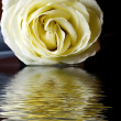White rose — Stock Photo #9460153