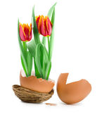Tulips bloom — Stock Photo