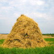 Stock Photo: Hay Field