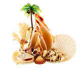 Palm in atoll and seashell — Stock Photo