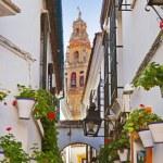 Flowers street at Cordoba Spain — Stock Photo