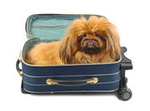 Dog in travel case — Stock Photo
