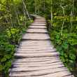 Pathway in Plitvice lakes park at Croatia - Stock Photo