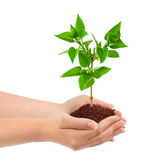 Hands and plant — Stock Photo