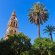 Mezquita Mosque Cathedral tower - Cordoba Spain — Stock Photo