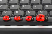 Toy ladybirds on computer keyboard — Stock Photo