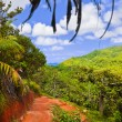 Pathway in jungles, Vallee de Mai, Seychelles - Stock Photo