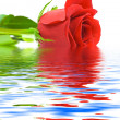 Rose in water — Stock Photo