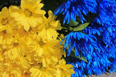 Yellow and blue flower background — Stock Photo