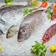 Fresh Frozen Fish — Foto de Stock