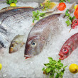 Foto de Stock  : Fresh Frozen Fish