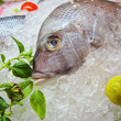 Fresh Frozen Fish — Stock Photo