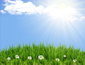 Green grass background with flowers.Sunmmer sunburst — Stock Photo
