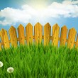Stock Photo: Wood fence and green grass meadow.Summer landscape with sun ligh