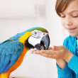 Child with ara parrot — Stock Photo #10684354