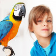 Child with ara parrot - Stock Photo