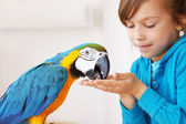 Child with ara parrot — Stock Photo