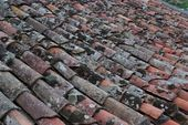 Old roof tiles covered with lichen and moss — Fotografia Stock