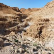 Gorge in desert cut by a Qumran creek near the Dead Sea — Stock Photo