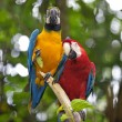 Wild Macaw - Stock Photo